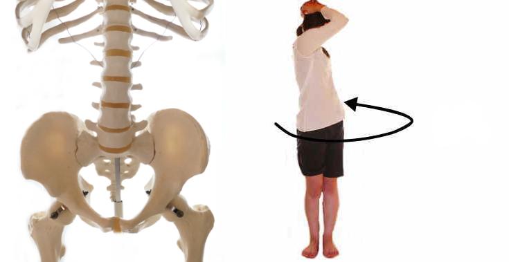 腹筋の回旋の動き