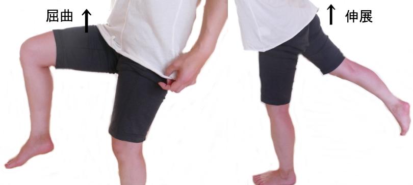 股関節の屈曲と伸展の動き