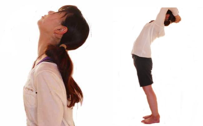 脊柱の伸展の動きと筋肉