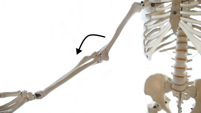 肘を伸ばす動き