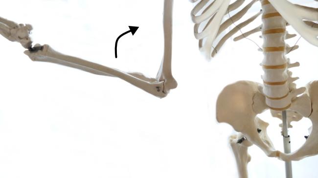 肘を曲げる動き