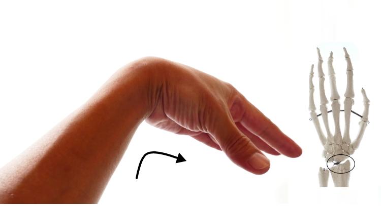 深指屈筋の手首の屈曲