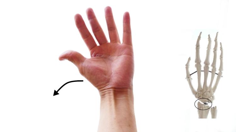長橈側手根伸筋の橈屈