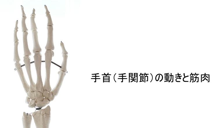手首の動きと筋肉