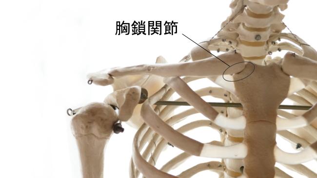 鎖骨と胸骨の関節