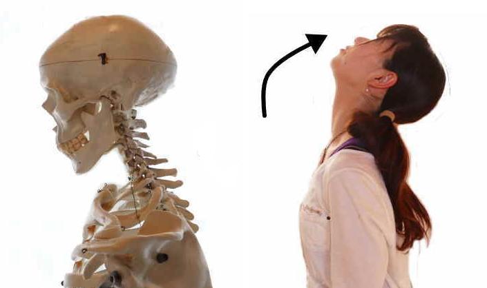 頭板状筋の働き