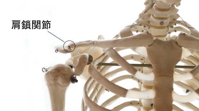 鎖骨と肩甲骨の関節