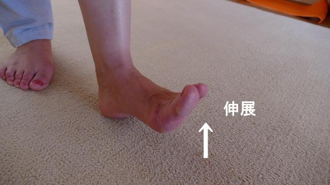 長母趾伸筋の母趾の伸展