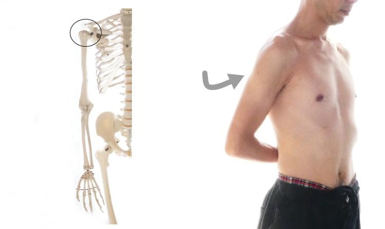 肩甲下筋の働き