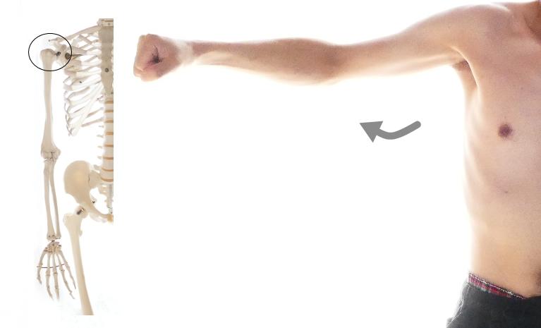 棘下筋の肩関節の水平伸展