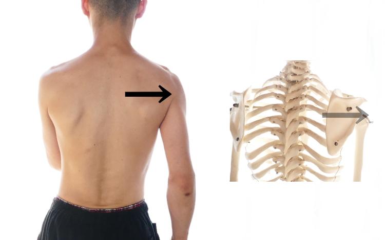 肩関節の水平屈曲に伴う肩甲骨の外転