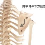 肩関節の内転に伴う肩甲骨の動き