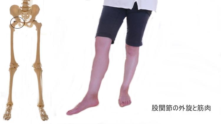 股関節の外旋