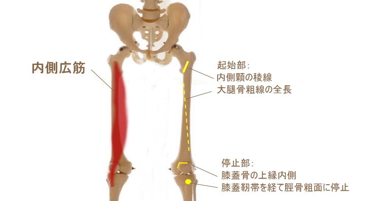 大腿四頭筋の内側