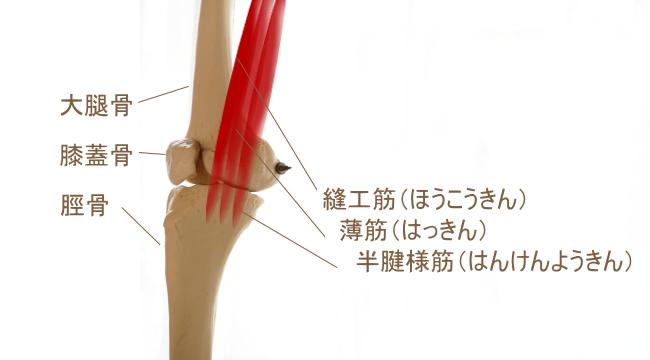 鵞足部の筋肉