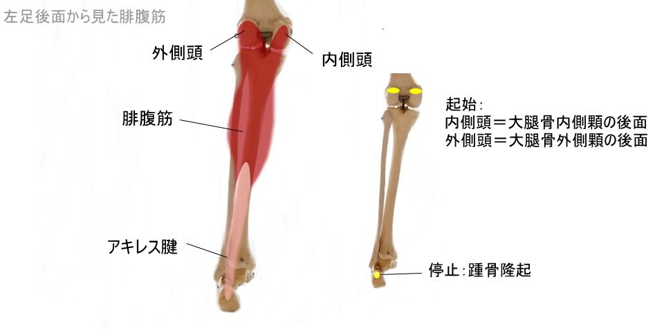 一番上のふくらはぎの筋肉