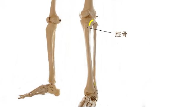 大腿筋膜張筋の停止部