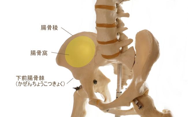 腸骨筋の起始部