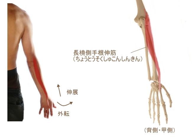 長橈側手根伸筋