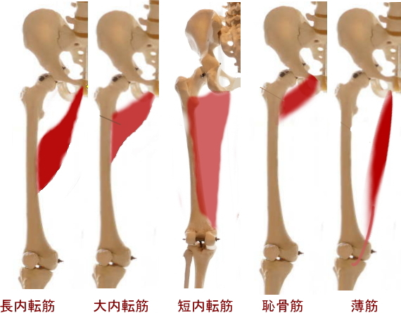 太ももの内側の筋肉