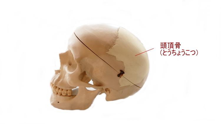 頭頂骨の位置